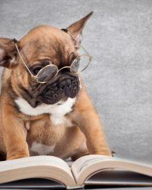 Một vài dấu hiệu nhận biết chó khôn và thông minh