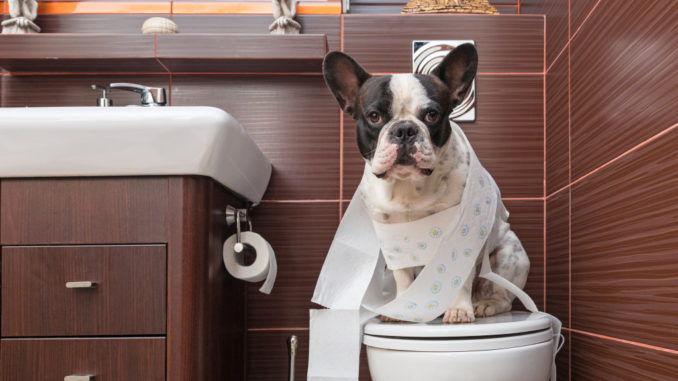 cho-di-toilet