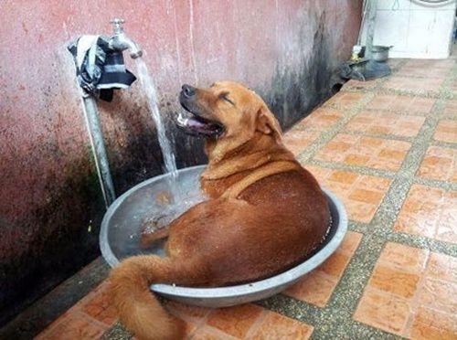 cách hạ nhiệt độ cho chó cưng