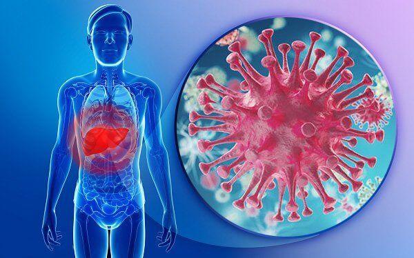 Virus viêm gan B