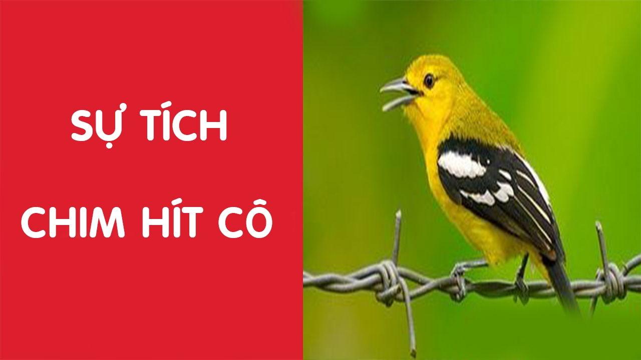 su-tich-chim-hit-co