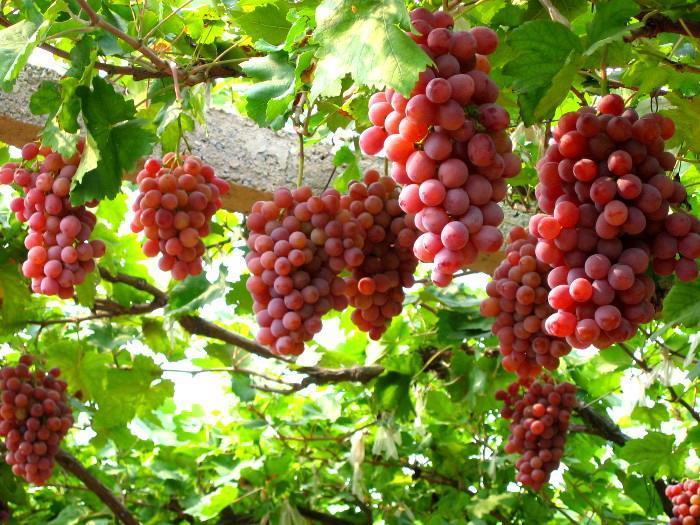 Top 10 Loại Trái Cây Tốt Cho Sức Khỏe Giàu Vitamin Khoáng Chất 6