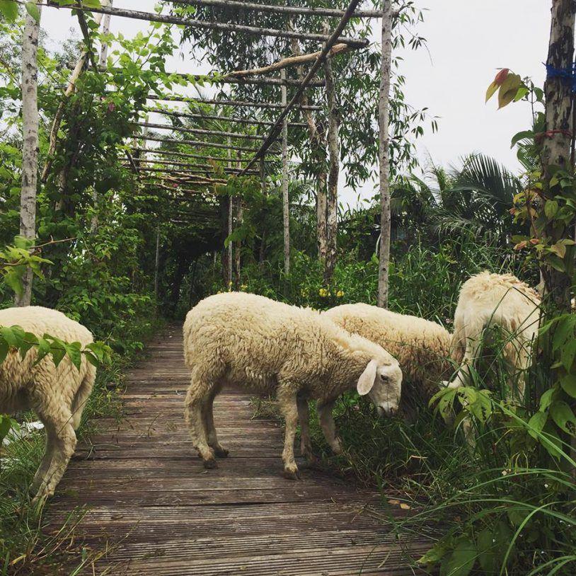 Đổi Gió Với Top 9 Địa Điểm Picnic Cuối Tuần Gần Sài Gòn 29