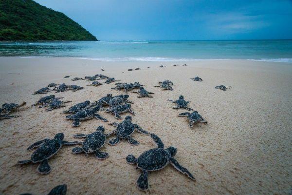 Top 07 Hòn Đảo Đẹp Tựa Thiên Đường Của Việt Nam 11