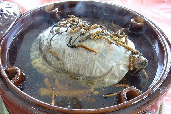 Top 05 Món Ăn Ngon Được Chế Biến Từ Đông Trùng Hạ Thảo 4